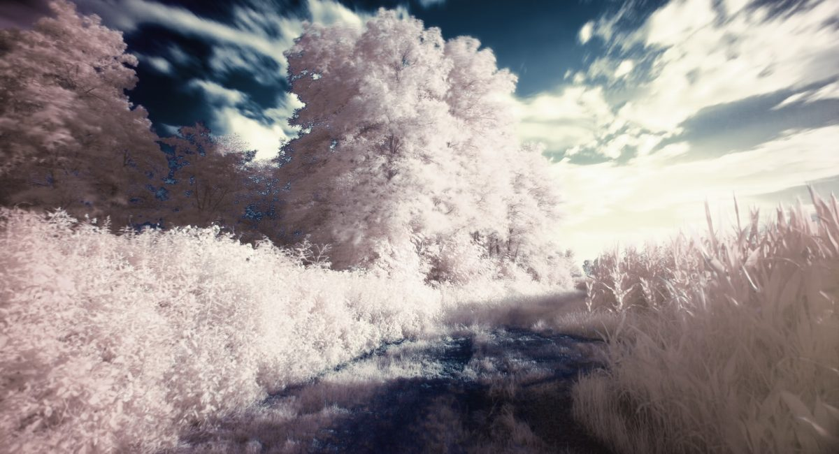 dream-filter-infrared-surreal